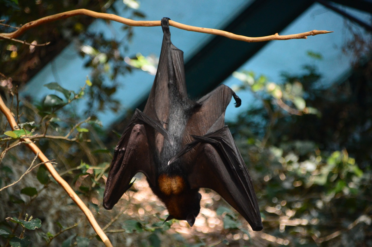 bat hanging from branch upside down