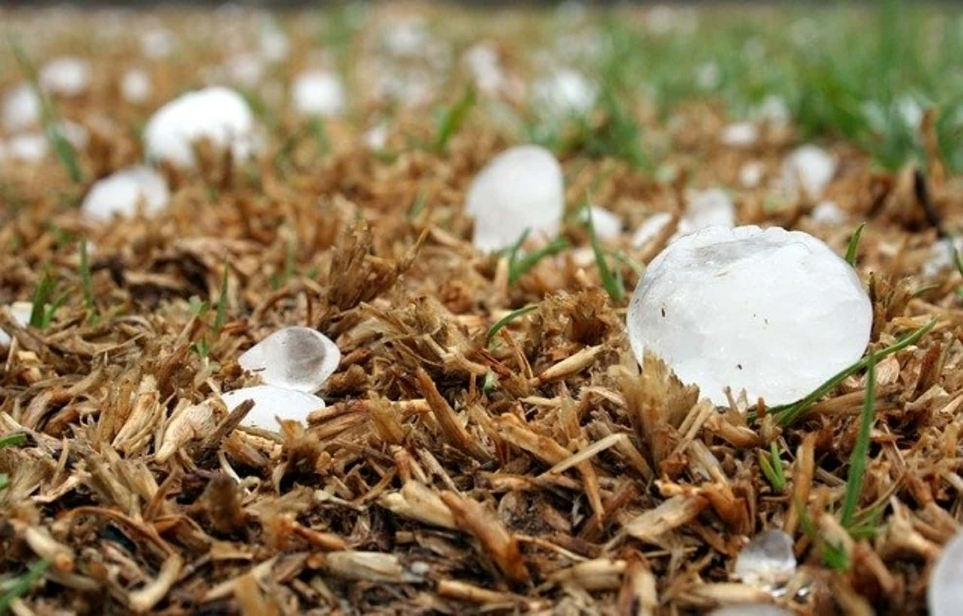 Dealing with Insurance Adjuster on Hail Damage Claims