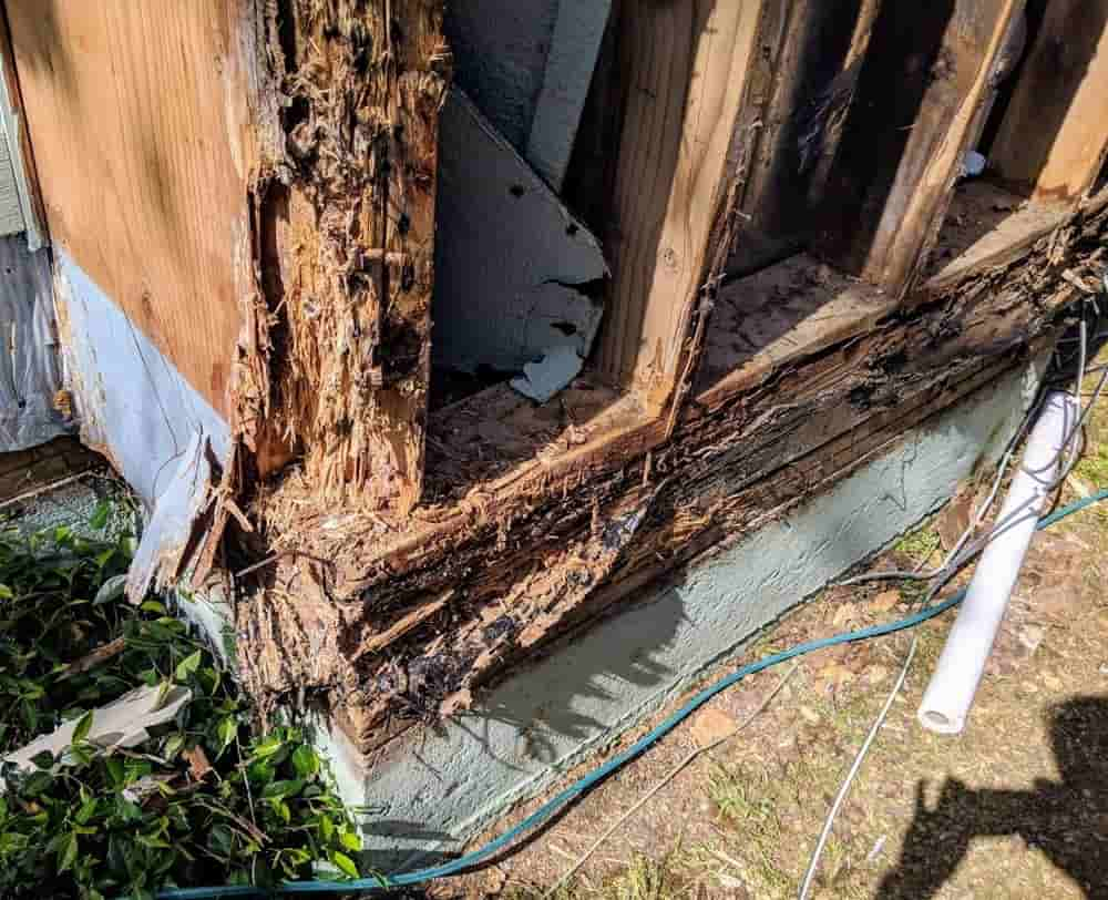 Does Home Insurance Cover Wood Rot?