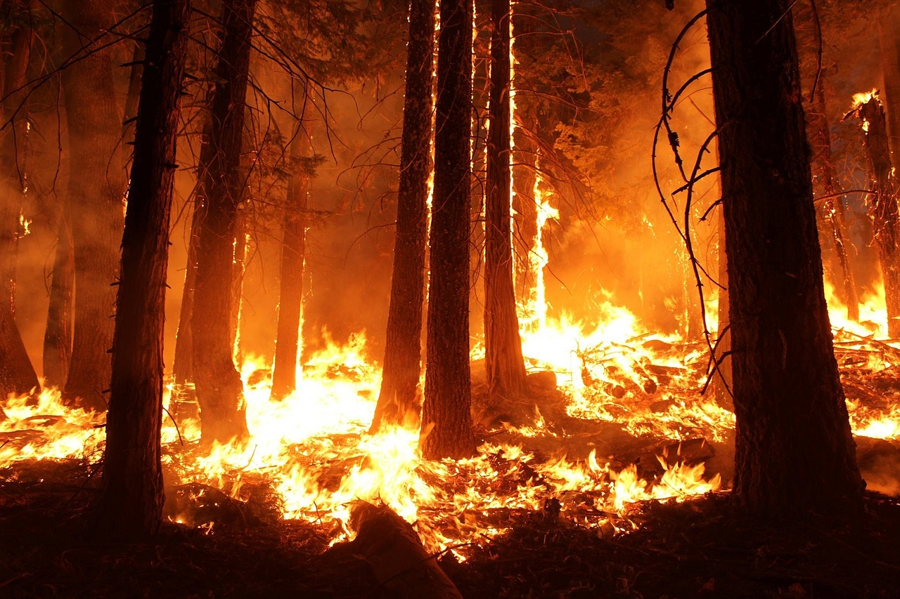 Will Homeowners Insurance Cover Your House in a Wildfire?