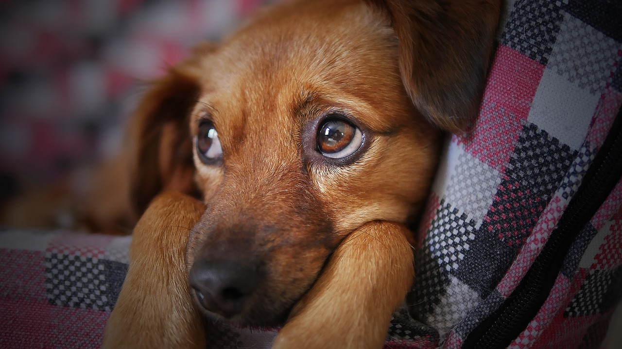 Dangerous Dogs - The Dog Breeds Insurance Companies Avoid