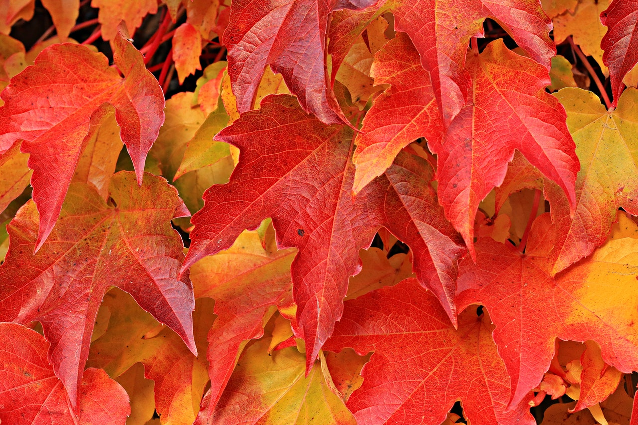 7 Tips to Get Your Home Safe & Snug for Fall